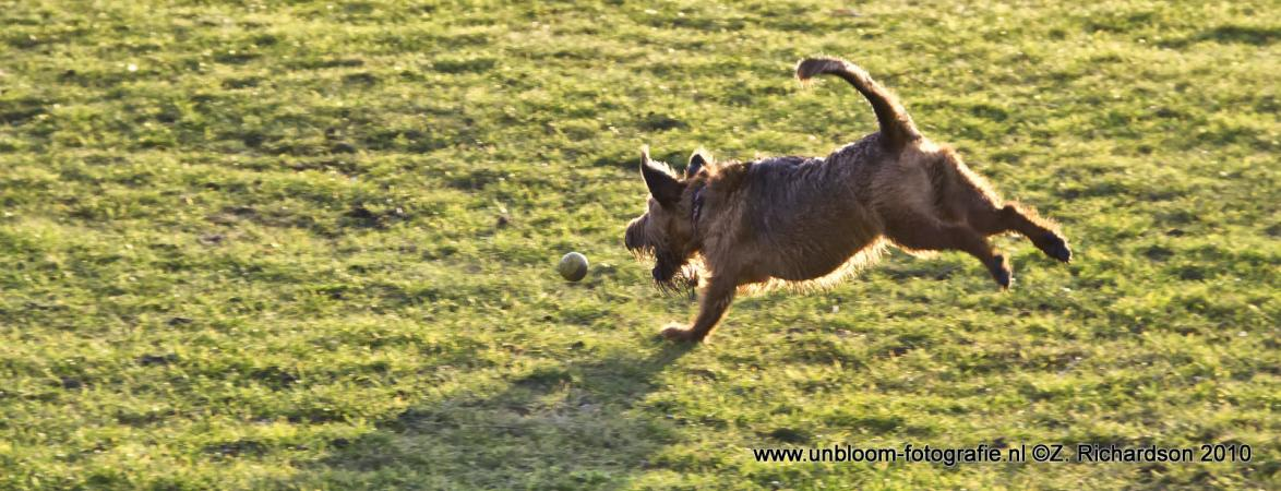 Canine ballistiek